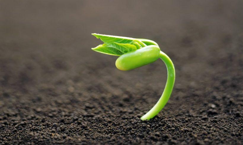 El tratamiento electrónico de semillas se presentará en Brasil Agrishow