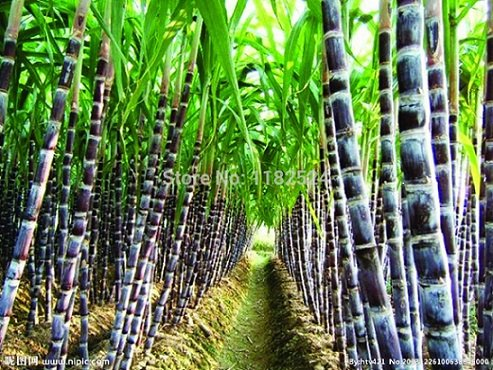 Corteva Agriscience,    Stoller reached exclusive agreement to sell bionematicide for sugar cane in Brazil